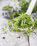 Heap of Winter Savory Stock Image