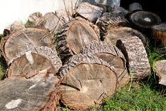 Heap of wood logs ready for winter. Cut tree trunks on grass. Stack of chopped firewood. A pile of woods in the house storage. Stock Photo