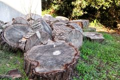 Heap of wood logs ready for winter. Cut tree trunks on grass. Stack of chopped firewood. A pile of woods in the house storage. Royalty Free Stock Photography