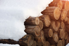 Heap of wooden logs Stock Image