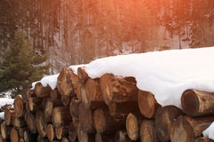 Heap of wooden logs Stock Images