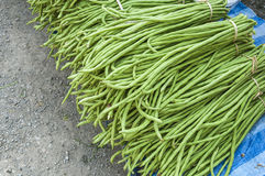 Heap of Yard Long Bean Royalty Free Stock Photos
