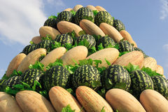 Heap  yellow melons and large  green watermelons. On the blue sky Stock Photos