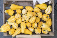 Heap yellow pumpkins in wooden box royalty free stock photography