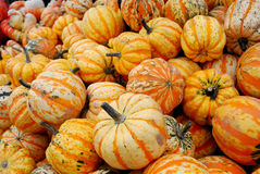 Heap of yellow striped pumpkins Stock Photo