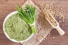 Heap of young powder barley, barley grass and grain on jute canvas, wooden background. Young powder barley in glass bowl, barley grass and grain on jute canvas Royalty Free Stock Photo