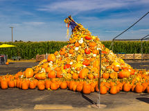 Heaping Pile of Pumpkins At Local Farm royalty free stock image