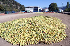 Heaps of apples Stock Photos
