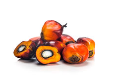Heaps of freshly harvested oil palm fruits on white background. Stock Photography
