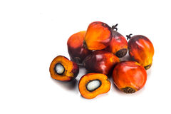 Heaps of freshly harvested oil palm fruits on white background. Royalty Free Stock Photography