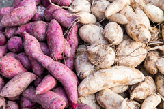 Heaps of freshly harvested purple and yellow skin sweet potatoes roots Royalty Free Stock Photos