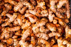 Heaps of freshly harvested turmeric roots Royalty Free Stock Photography