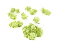 Heaps of hop. Stock Photos