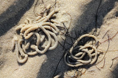 Heaps of Lugworm in the tidal flats at low tide Royalty Free Stock Image