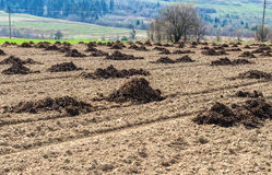 Heaps of manure Royalty Free Stock Image