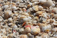 Heaps of shells. Stock Images