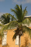 Hear the palmtrees. Detail of traditional Caribbean home with lots of palmtrees stock image