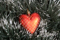 Heart. Red christmas heart  on spruce background Royalty Free Stock Photography