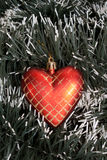 Heart. Red christmas heart  on spruce background Royalty Free Stock Photo