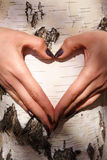Heart. Two hands in the form of heart on a background of a tree Royalty Free Stock Photos