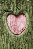 Heart. Carved into the bark of an oak tree royalty free stock photo