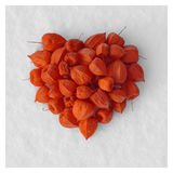 Heart. From the garden-stuffs of ground-cherry on to snow Royalty Free Stock Photography
