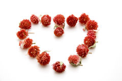 Heart. Dry flowers in heart form onto white background Stock Photography