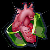 Heart. Human Heart with Axes and Green Transparent Arrow around it on Black Background. Vector Illustration (EPS v8.0 Stock Photos