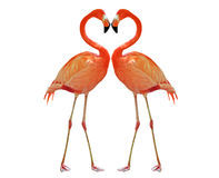 Heart. Two pink flamingo making heart with necks Stock Image
