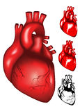Heart. Vector illustration of human heart mesh, colour and black & white Royalty Free Stock Photos