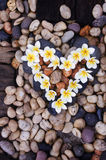Heart. Flowers lines on the pebbles in heart shape Royalty Free Stock Images