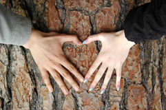 Heart. Made from women and man hands on the bark Royalty Free Stock Photography