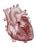 Heart. Detailed black & white heart illustration on isolate background Stock Photos