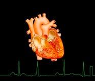 Heart. Detailed of heart illustration on black background stock illustration
