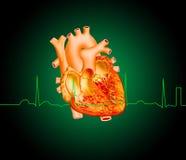 Heart. Detailed of heart illustration on dark green gradient background vector illustration