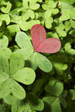 Heart. Within field of green clover royalty free stock image