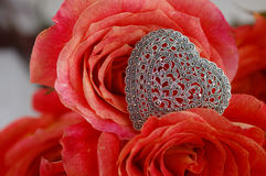 Heart. Orange-red roses with sterling silver filigree heart broach - closeup, macro Royalty Free Stock Photo