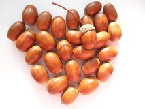 Heart acorns texture background Stock Image