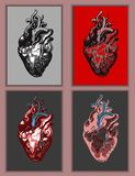 Heart anatomy in different colors. Vector. Heart anatomy with vessels in different color versions. Vector illustration royalty free illustration