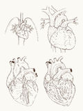 Heart anatomy hand draw Royalty Free Stock Image