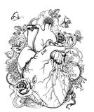 Heart - anatomy picture with flowers. Isolated on white royalty free illustration