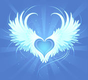 Heart of an angel. Blue heart of an angel with painted art, beautiful white wings on a blue background radiant Stock Photos