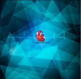 Heart anmatomy Royalty Free Stock Images
