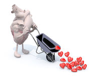 Heart with arms and legs carries a wheelbarrow with hearts Royalty Free Stock Image