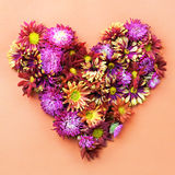 Heart from asters. Stock Images