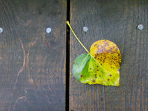Heart of Autumn stock photography