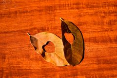 Heart in an autumn leaf on a background of grained wood Stock Image