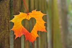 Heart in autumn leaf Royalty Free Stock Images