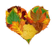 Heart of the autumn leaves Royalty Free Stock Photography