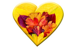 Heart from autumn leaves Royalty Free Stock Image